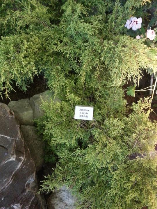 Zahrada - Obrázek č. 4