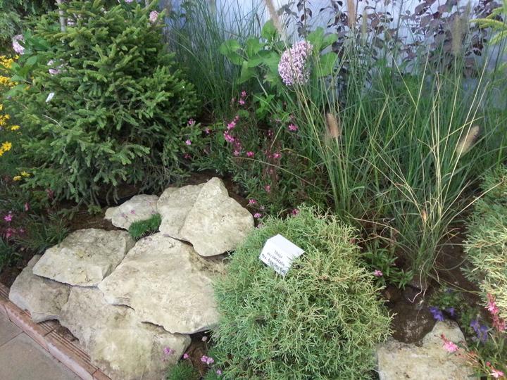 Zahrada - Obrázek č. 7