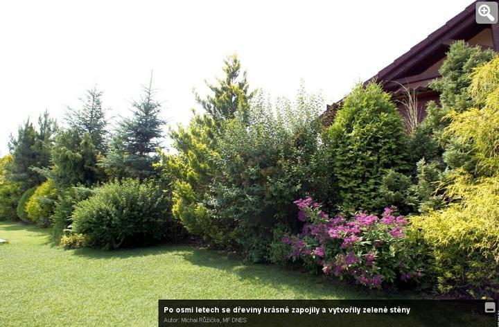 Zahrada - úžasně zarostlá strana,... pokud byste nekdo vědel, co je to za rostliny, tak prosím piste