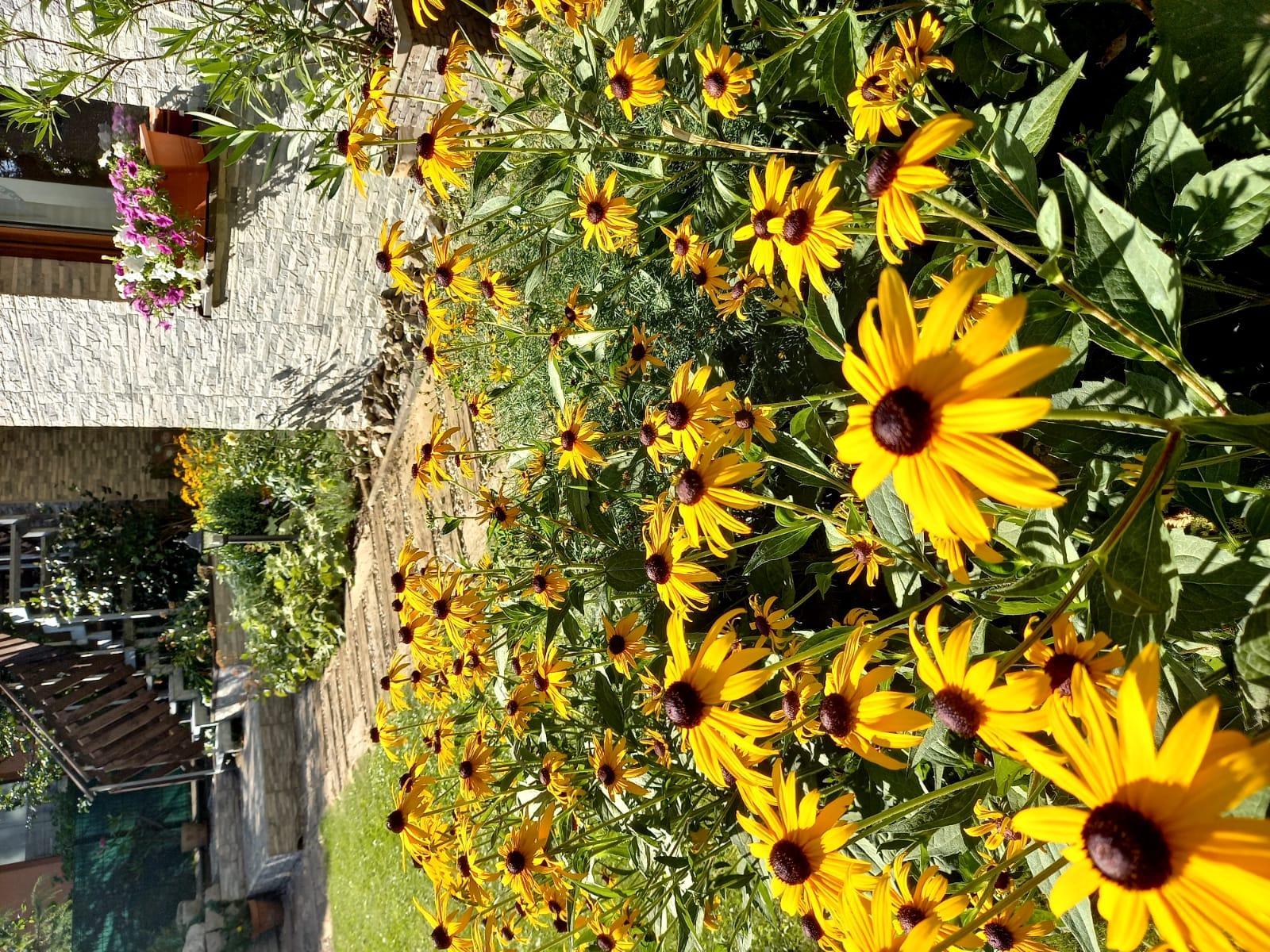 Môj malý kúsok raja😊 - Rudbekie rozžiarujú každý kút záhrady.
