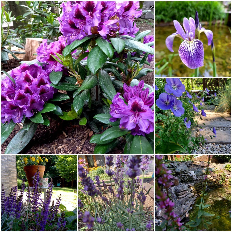 Môj malý kúsok raja😊 - Fialová krása v záhrade