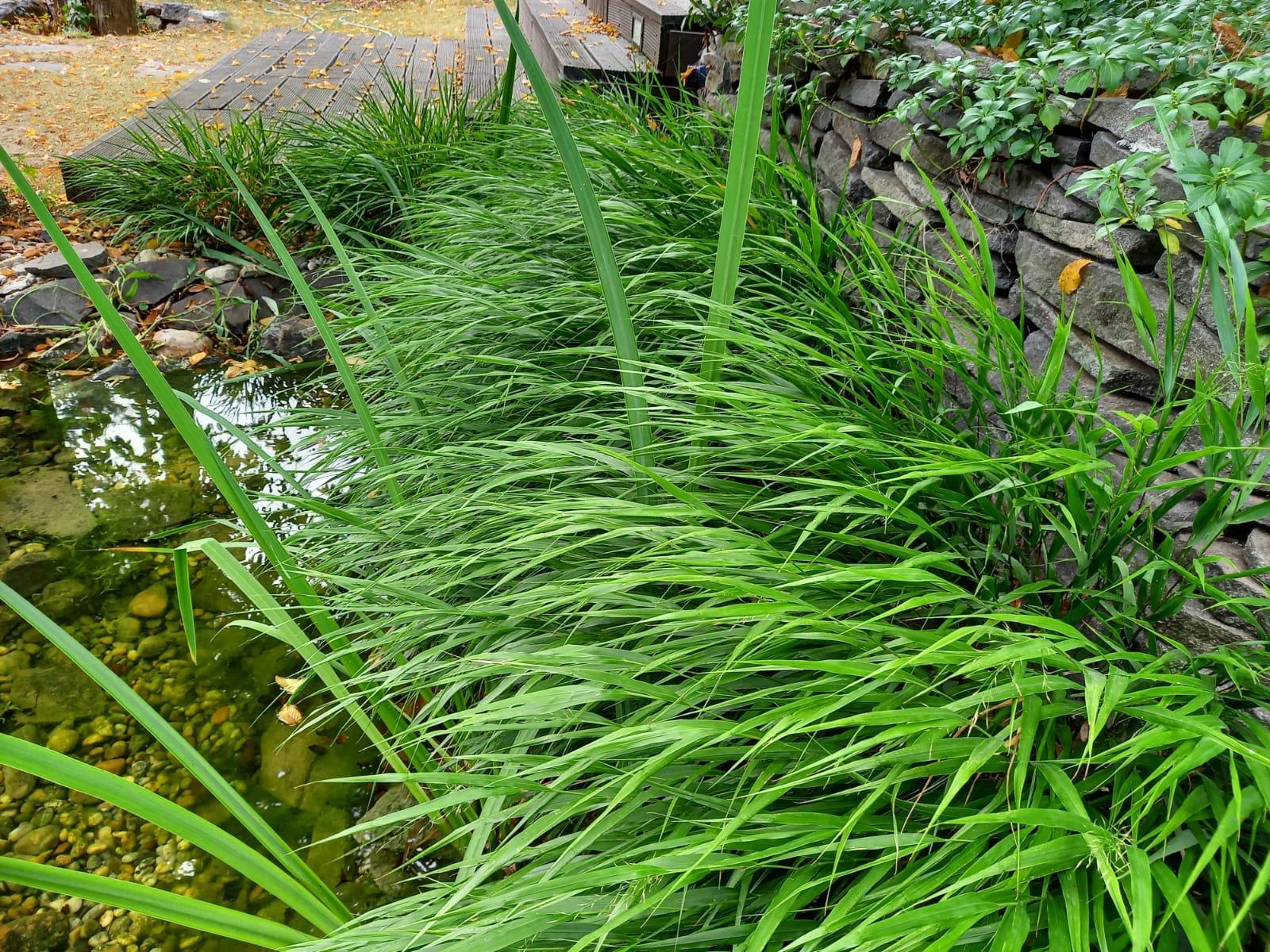 Môj malý kúsok raja😊 - Trávy pri vode už nadobudli takýto rozmer.