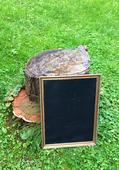 Tabule ve zlatém rámu 33x43 cm,