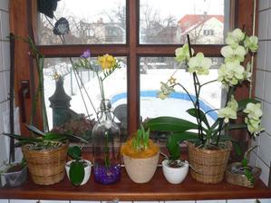 Na kuchyňské okno se mi podařilo nacpat jen malý květináček s narciskama