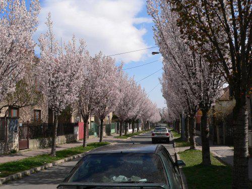 Naše ulice je na jaře nádherná