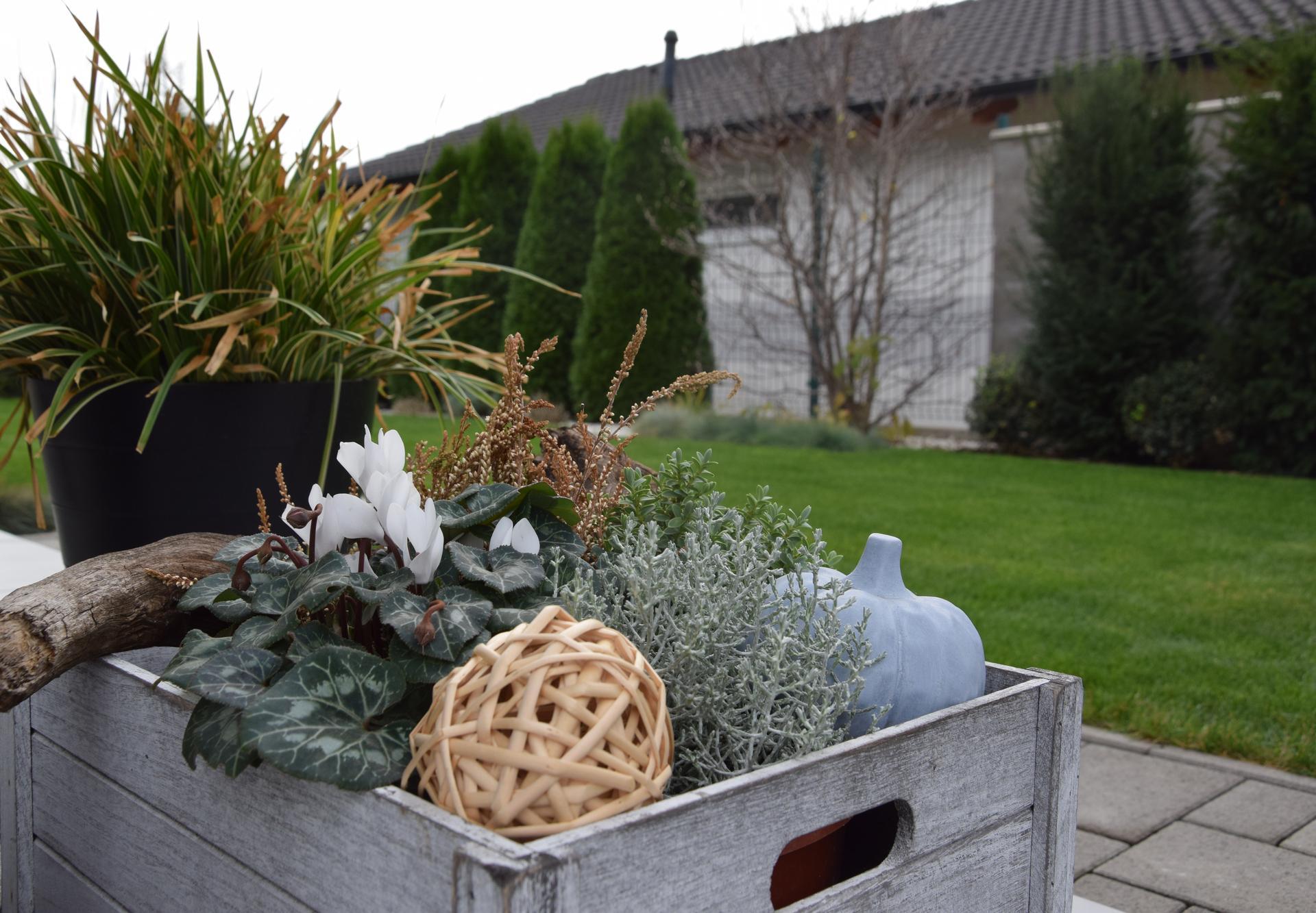 Naša záhrada v roku 2018 - Obrázok č. 9