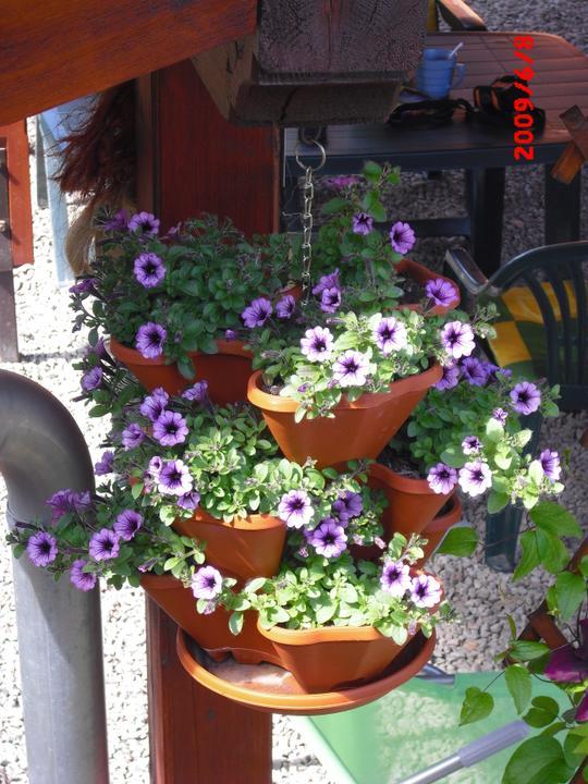Zahrada a okolí - Obrázek č. 59