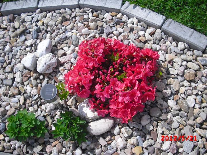 Zahrada a okolí - azalka