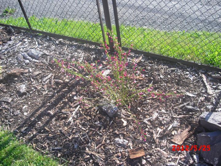 Zahrada a okolí - čilimník:-)