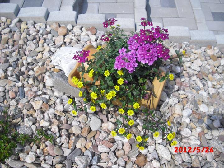 Zahrada a okolí - verbena a sanvitálie :-)