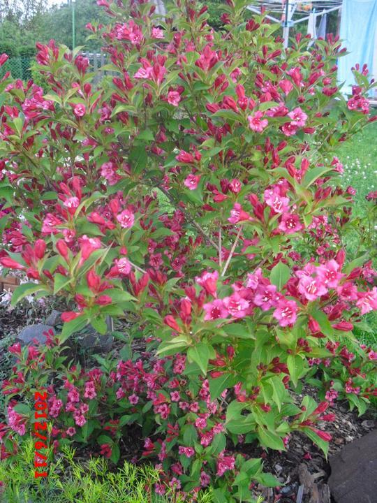Zahrada a okolí - Obrázek č. 78