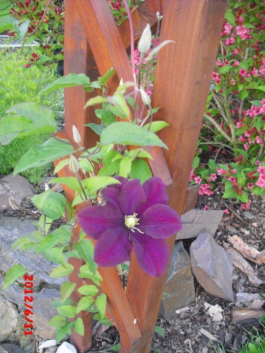 Zahrada a okolí - Obrázek č. 162