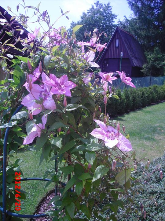 Zahrada a okolí - Obrázek č. 82