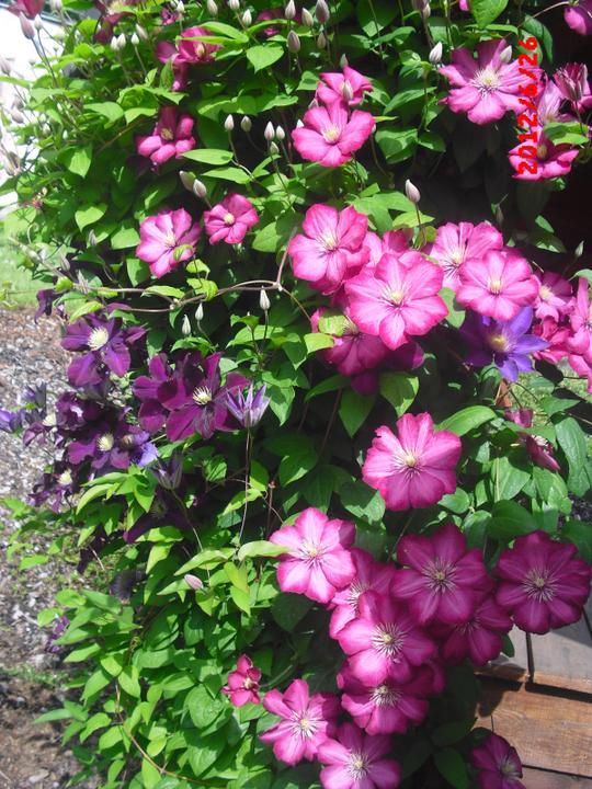 Zahrada a okolí - Obrázek č. 83