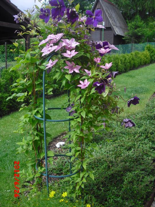 Zahrada a okolí - Obrázek č. 84