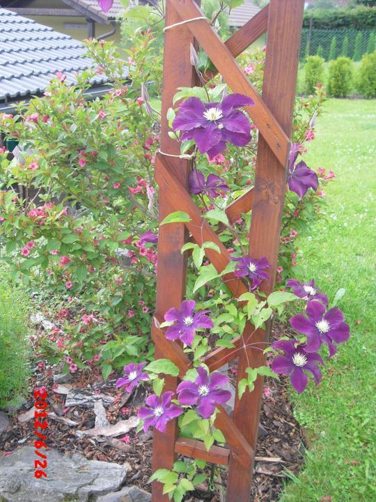 Zahrada a okolí - Obrázek č. 85