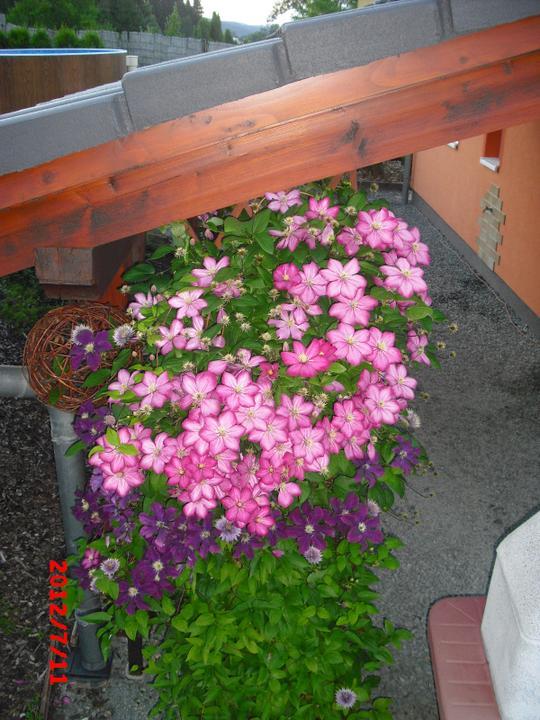 Zahrada a okolí - Obrázek č. 163