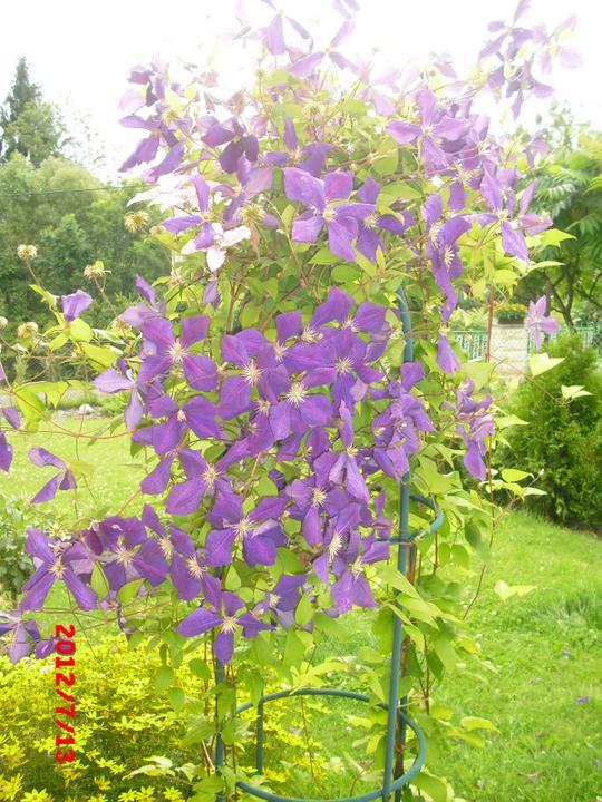 Zahrada a okolí - Obrázek č. 87