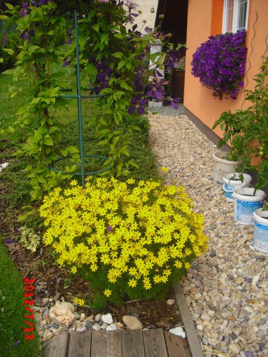 Zahrada a okolí - Obrázek č. 88