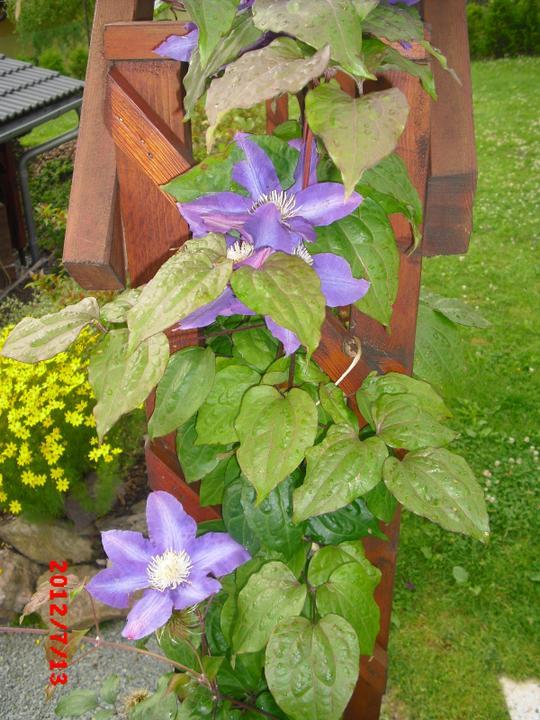 Zahrada a okolí - Obrázek č. 91