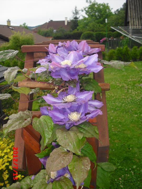 Zahrada a okolí - Obrázek č. 164