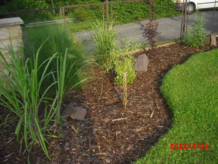 Zahrada a okolí - Obrázek č. 98