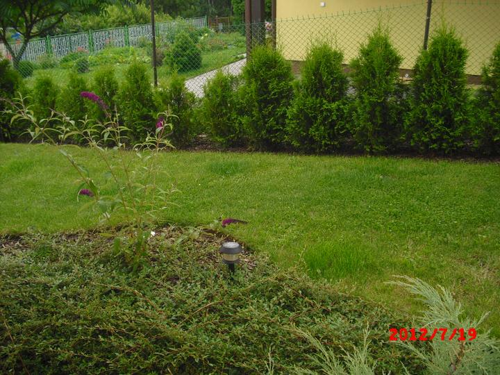 Zahrada a okolí - tújky se už vzpamatovaly:-)