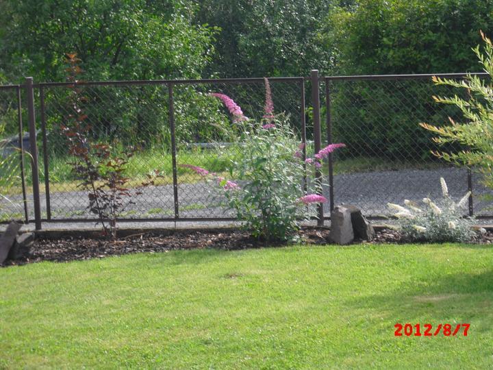 Zahrada a okolí - komule v květu,jsou nádherné:-)