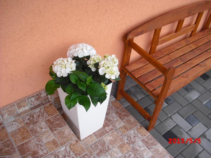 Zahrada a okolí - Obrázek č. 20