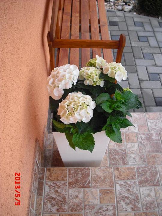 Zahrada a okolí - Obrázek č. 23
