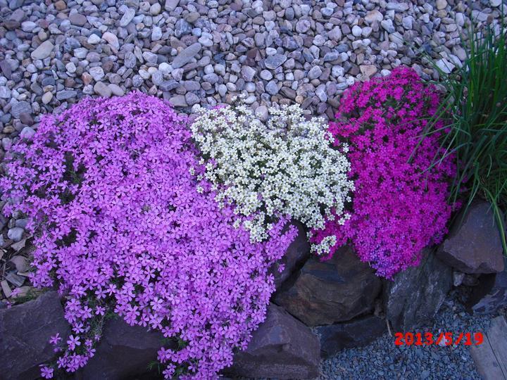 Zahrada a okolí - Obrázek č. 5