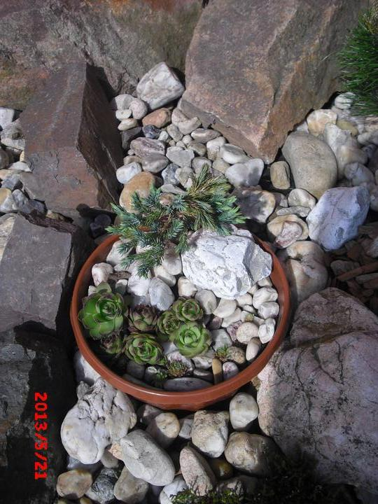 Zahrada a okolí - Obrázek č. 4