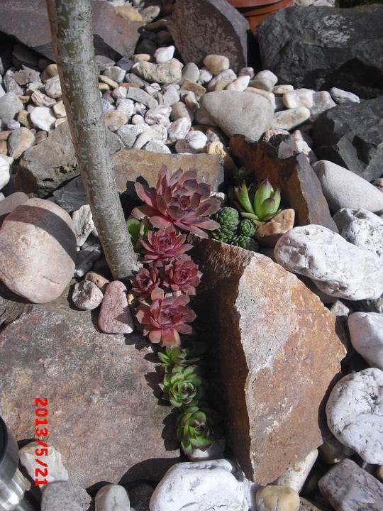 Zahrada a okolí - mám ráda netřesky:-)