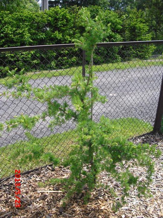 Zahrada a okolí - Obrázek č. 170