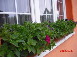 husté až až:-)jen těch květů je zatím málo:-(není divu,jaké je počasí:-(