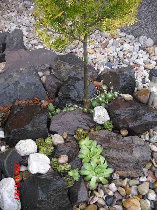 Zahrada a okolí - Obrázek č. 181