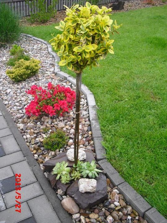 Zahrada a okolí - Obrázek č. 180