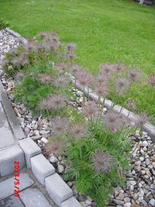 Zahrada a okolí - Obrázek č. 179