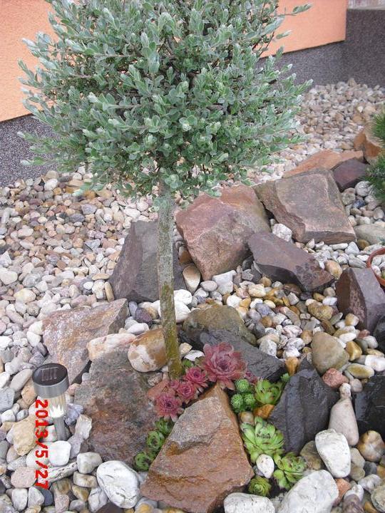 Zahrada a okolí - Obrázek č. 186