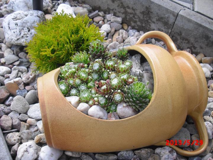 Zahrada a okolí - Obrázek č. 189