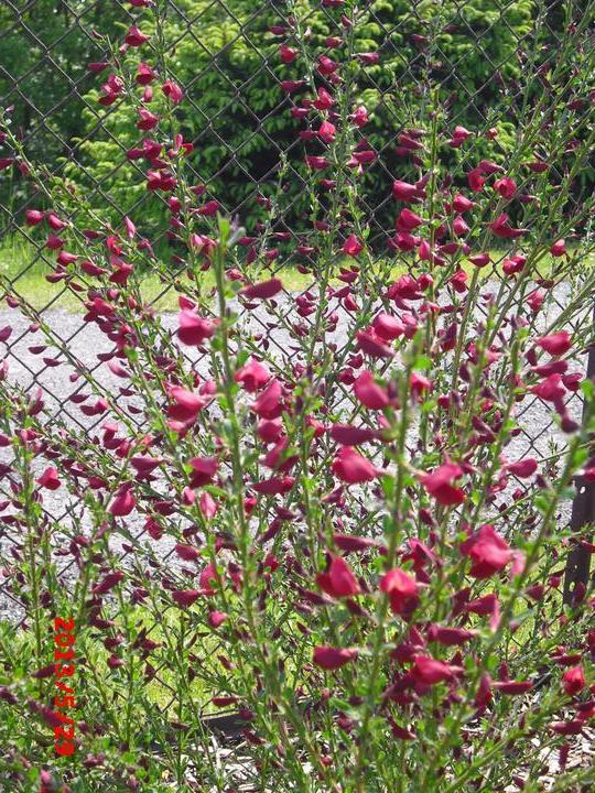 Zahrada a okolí - Obrázek č. 188