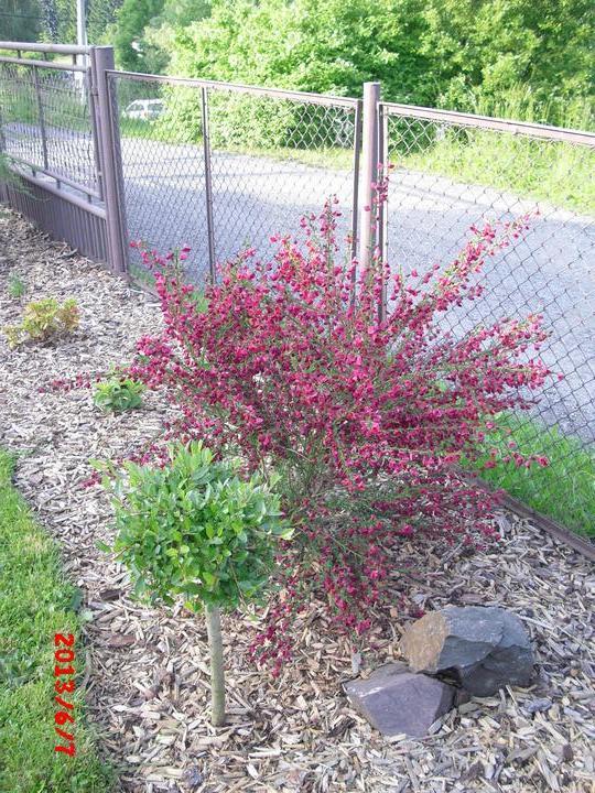 Zahrada a okolí - Obrázek č. 192