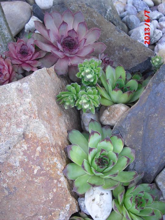 Zahrada a okolí - Obrázek č. 195