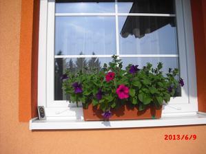už kvetou i na východní straně......