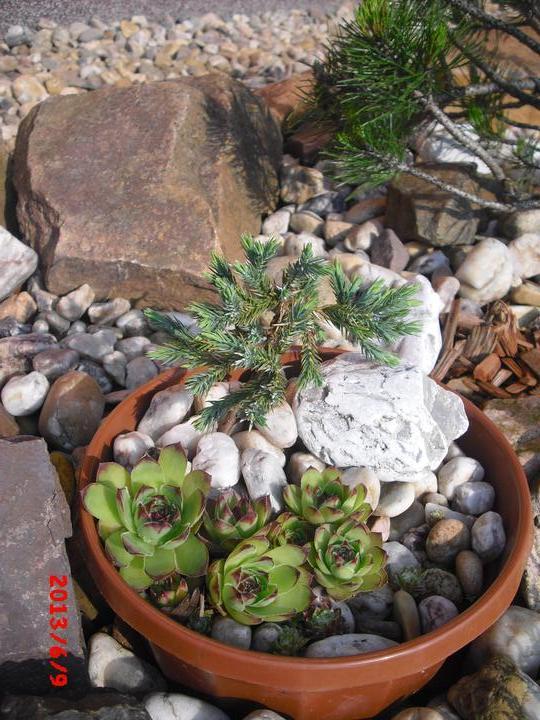Zahrada a okolí - netřesky miluji.....