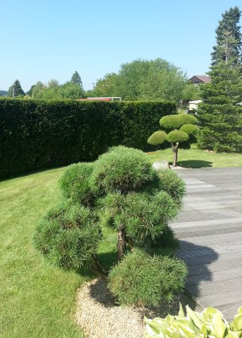 Zahrada-můj sen a inspirace - Obrázek č. 24