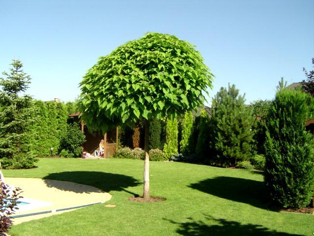 Zahrada-můj sen a inspirace - Obrázek č. 76