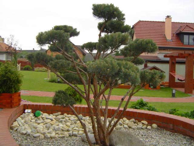 Zahrada-můj sen a inspirace - Obrázek č. 77