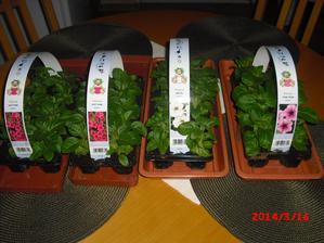 já si kupuji surfínky v obchodech,obi,baumax,hornbach v platičkách po 10ks,nakupuji je již v březnu a pak si je doma připravuji na venek:-)ale můžete nakoupit i po kusech v zahradnictví,květinářství,tam jsou k prodeji až kolem dubna:-)