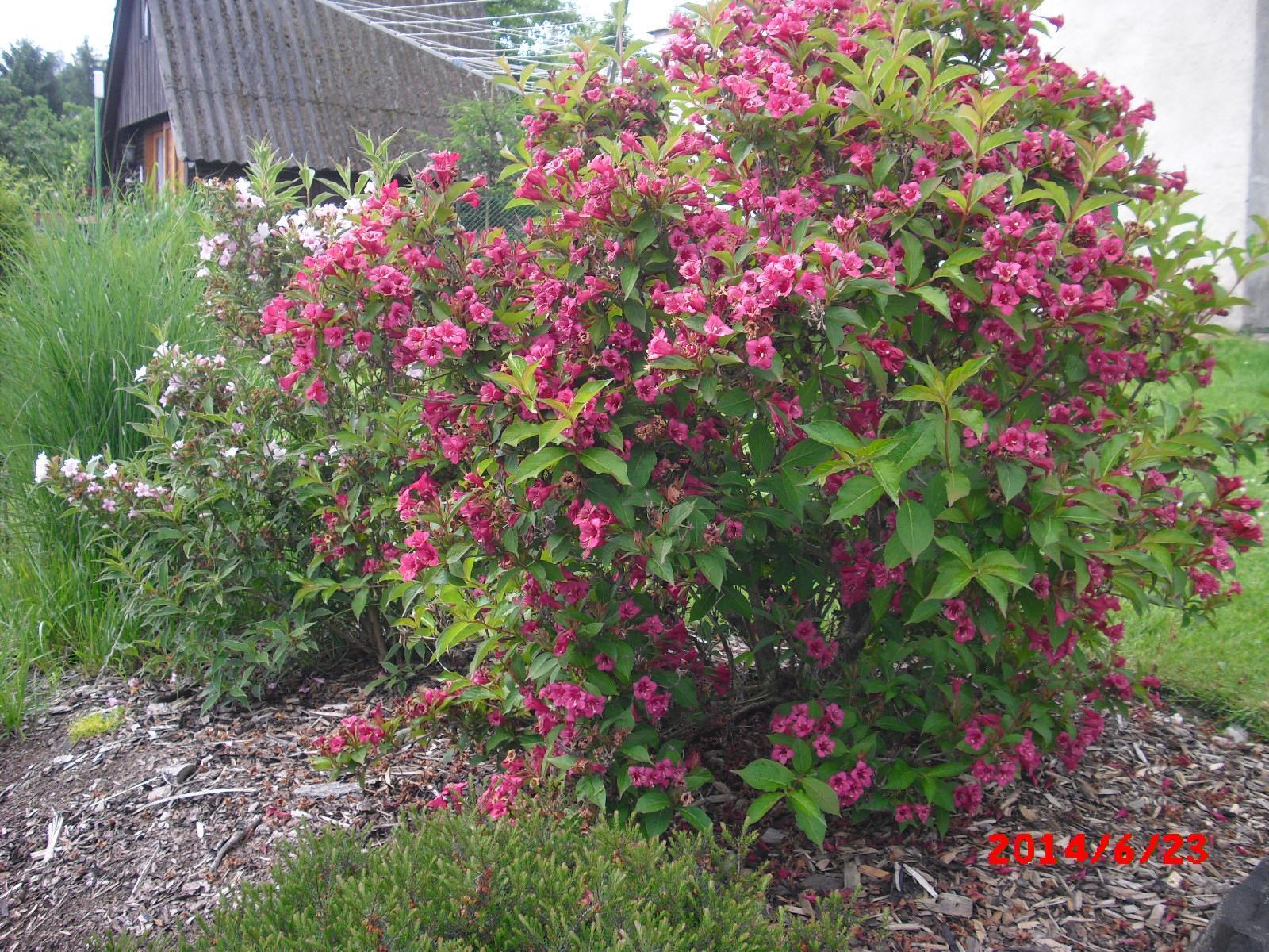 Zahrada a okolí - Obrázek č. 356